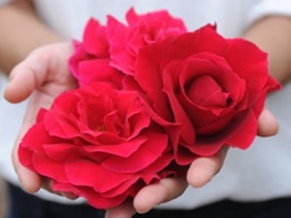 hibiyakadan-rose-sweets (23)