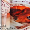 マイブック(MyBook)ハードカバーはおすすめの高品質写真集フォトブック・アルバム