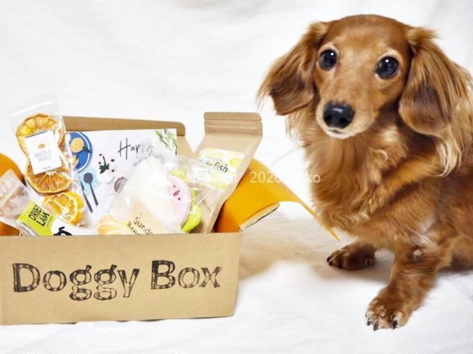 Doggy Box ドギーボックス 感想 犬 おもちゃ おかし